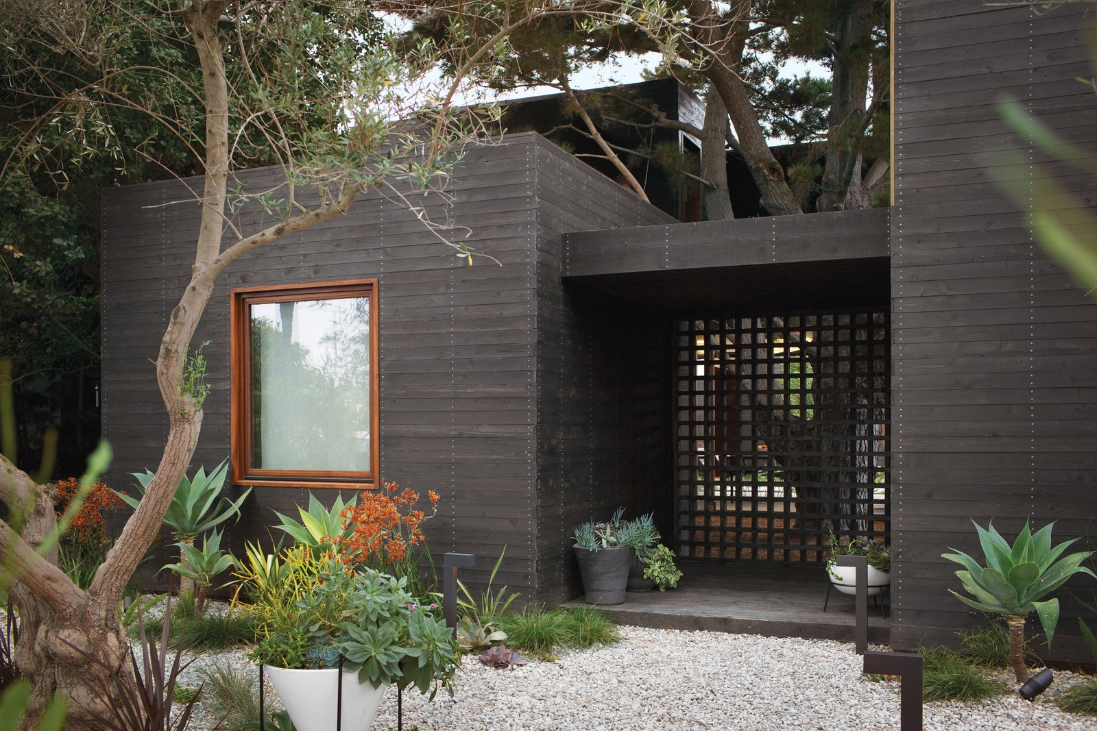 """The knotty cedar cladding from Crenshaw Lumber was pretreated with an ebony stain from Timber Pro UV—twice on both sides—prior to being brought to the site, where it was left for eight weeks so that it could adjust to the moist seaside air before installation. """"Cedar siding swells or shrinks when it gains or loses moisture while it reaches equilibrium with the content of the surrounding air,"""" says Michael. Photo by Coral von Zumwalt. Tagged: Outdoor, Walkways, Garden, Gardens, Hardscapes, and Raised Planters.  Photo 10 of 10 in A Modern Bungalow in Venice Beach"""