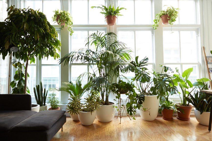 The space opened on the first day of Spring and is filled with an array of plants that include a moss wall, air plant wall, Staghorn Ferns, a variety of potted plants, hanging ceiling plants, and trees.  Office by Bridget Carlson from No Need to Gossip Around the Water Cooler Here