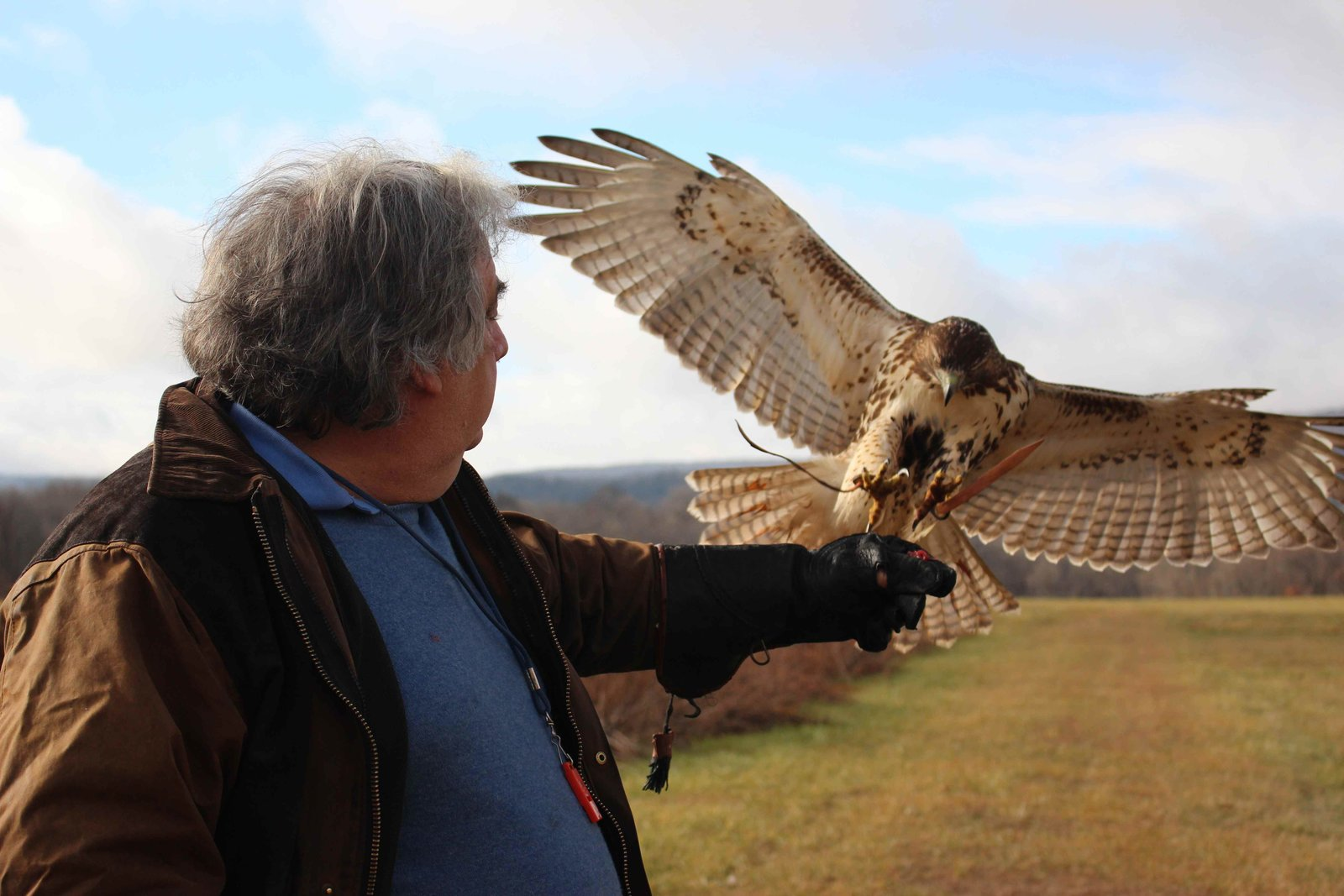 Shope—a licensed falconer—captures, trains, then releases one red-tailed hawk each year.  Photo 2 of 9 in A House Not Built for Human Beings