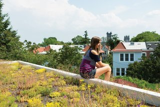 4 Easy Steps to Creating Your Own DIY Green Roof - Photo 6 of 6 - Eliza takes in the view from her perch atop the house's green roof, which Daniel believes to be the first of its kind in the neighborhood. The family received a subsidy administered by DC Greenworks and funded by the DC Department of the Environment.