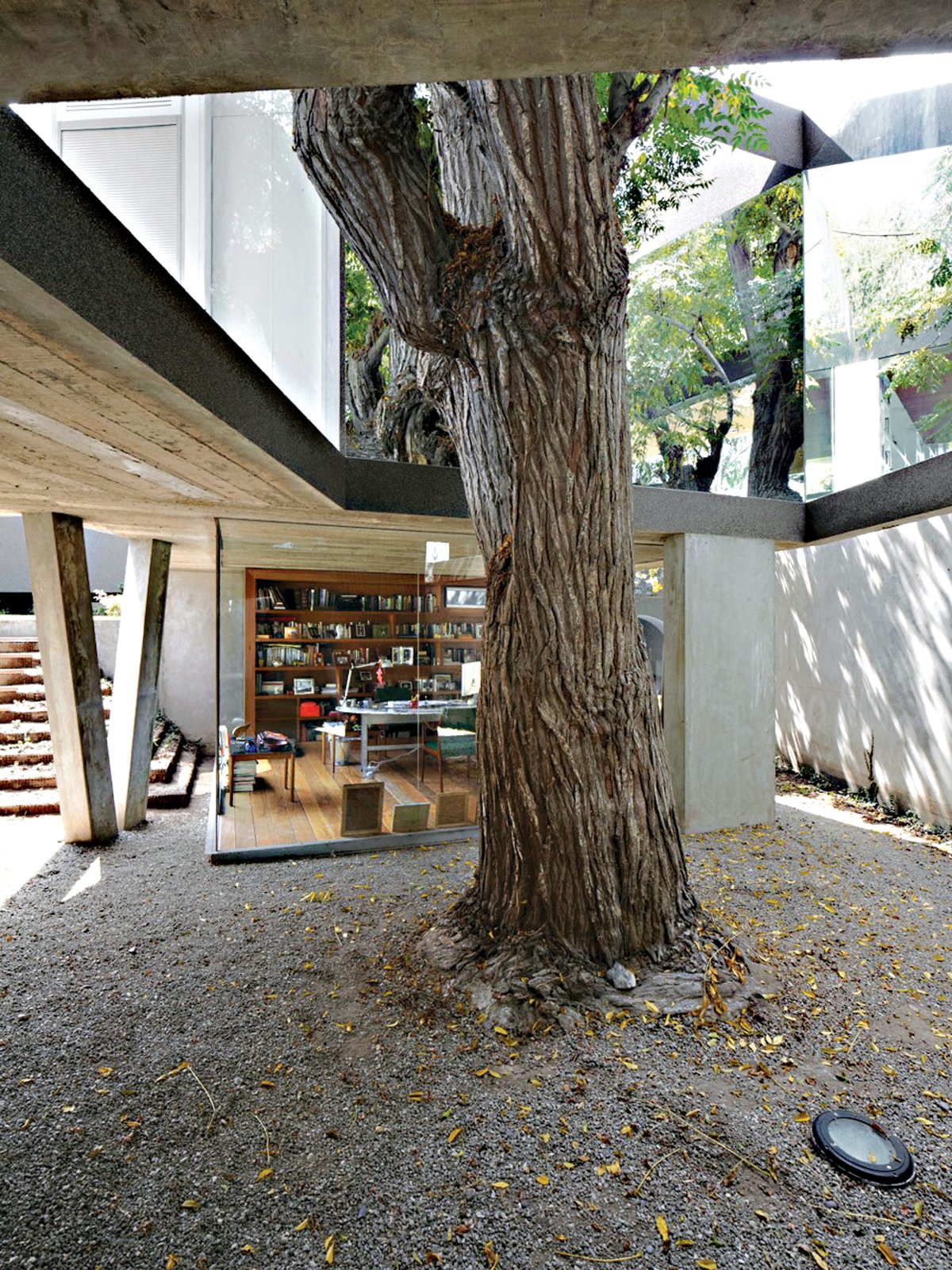 This open-ended box, lined in mirrored glass, performs like a kaleidoscope, amplifying the mature Melia tree's presence within the dining room. Tagged: Outdoor, Back Yard, and Trees.  Photo 9 of 13 in A Modern Concrete Home in Peru