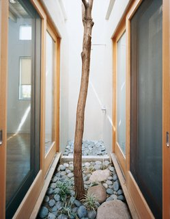 Casa Study House #1 - Photo 3 of 10 - A Robinia tree moved from another part of the site grows in this pocket courtyard and thermal chimney in the heart of the house.