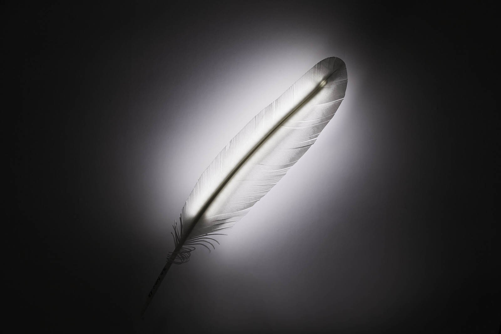 "A play on words, Plune designed by Franz Canins combines the Latin words for ""feather"" and ""light.""  3D Printed Lighting by Exnovo by Diana Budds"