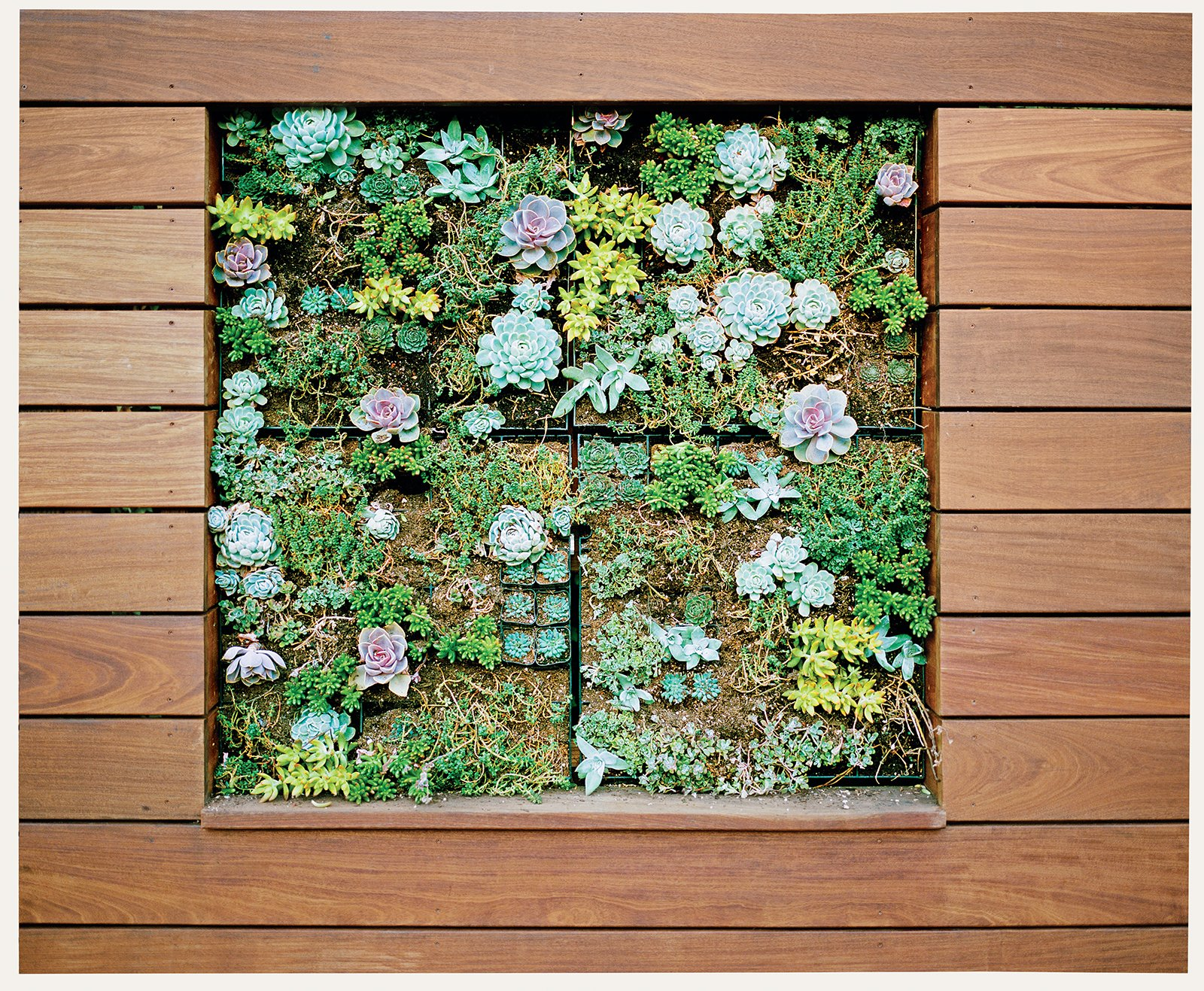 The vertical planter in the deck contains ten varieties of succulents.  Photo 2 of 6 in Bay Area Ipe-Clad Backyard Getaway