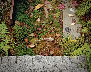 Landscape Design for All Climates - Photo 12 of 12 -