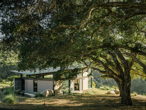 "The bedroom pavilion is mostly hidden, thanks to a massive native California oak—part of a grove. ""That's the good thing about oaks—they keep their leaves in the winter, so you don't have one view in the summer and another in the winter,"" Suzanne says."