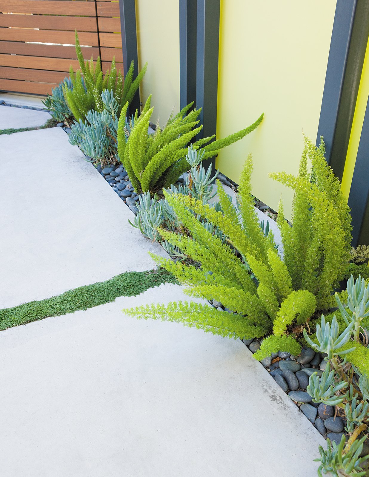 Photo 2 of 9 in creative landscape design for a renovated for Modern low maintenance plants