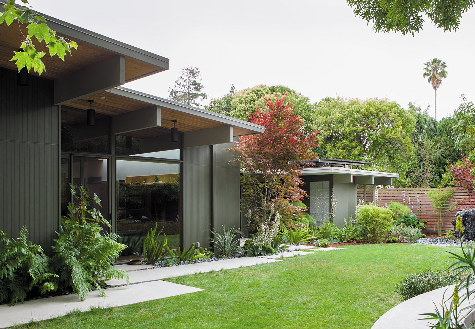 In the back, ferns and other shade-friendly plants thrive beneath the home's deep overhangs. Tagged: House, Wood Siding Material, Outdoor, Grass, Walkways, and Concrete Patio, Porch, Deck.  Photo 3 of 9 in Creative Landscape Design for a Renovated Eichler in California