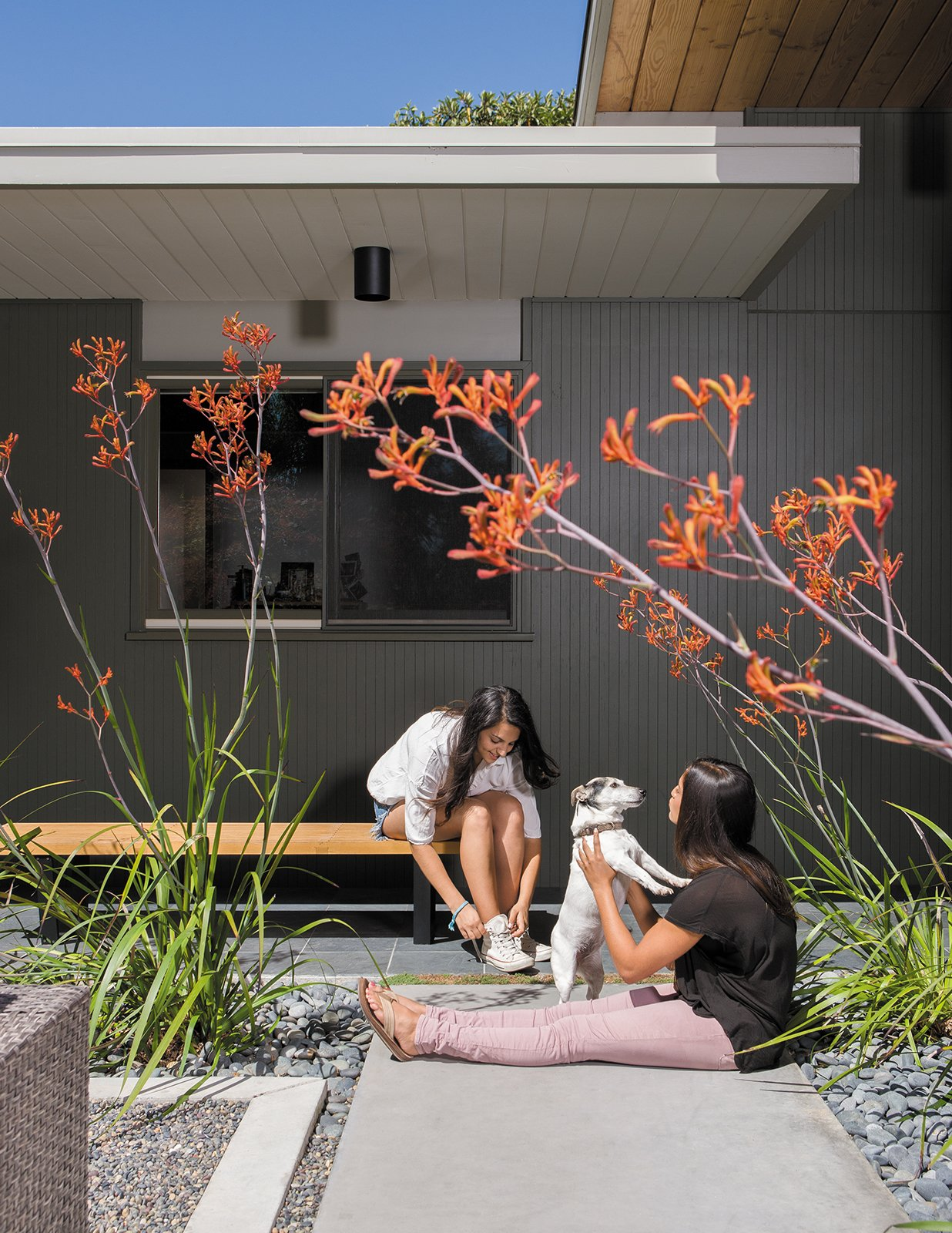 Their daughters, Annapurna, left, and Siddartha, play with their dog, Anouck, beneath the kangaroo paws in the entry garden courtyard. Tagged: Outdoor, Hardscapes, Walkways, Concrete Patio, Porch, Deck, and Front Yard.  Outdoor by Isabel Solorzano from Creative Landscape Design for a Renovated Eichler in California