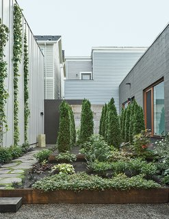 """Hutchins and Montague worked with Samuel H. Williamson Associates Landscape Architecture on the garden, which is planted with sword ferns, vine maple, and wild ginger. """"When we look at it from the bedroom, it's our private little forest,"""" Montague says."""