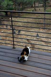 Mountaintop Modern - Photo 7 of 8 - The couple's Calico cat, Popper, watches a flock of hen turkeys from a deck. Photo by Barry B. Doyle.