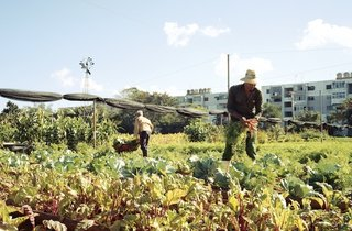 Havana: World Capital of Urban Farming? - Photo 1 of 8 -