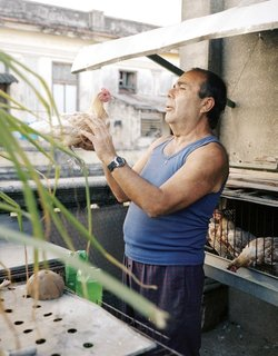 Havana: World Capital of Urban Farming? - Photo 2 of 8 -