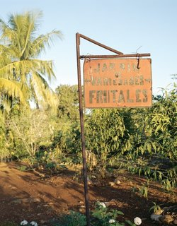 Havana: World Capital of Urban Farming? - Photo 4 of 8 -