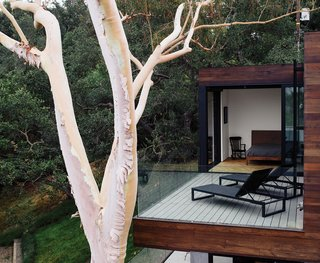 "The terrace off a bedroom holds chaise longues from Design Within Reach. ""When we laid out the project, the eucalyptus tree was going to go away,"" says Walker. ""But then we thought, if we move the foundation a little bit, we can probably save the tree."""