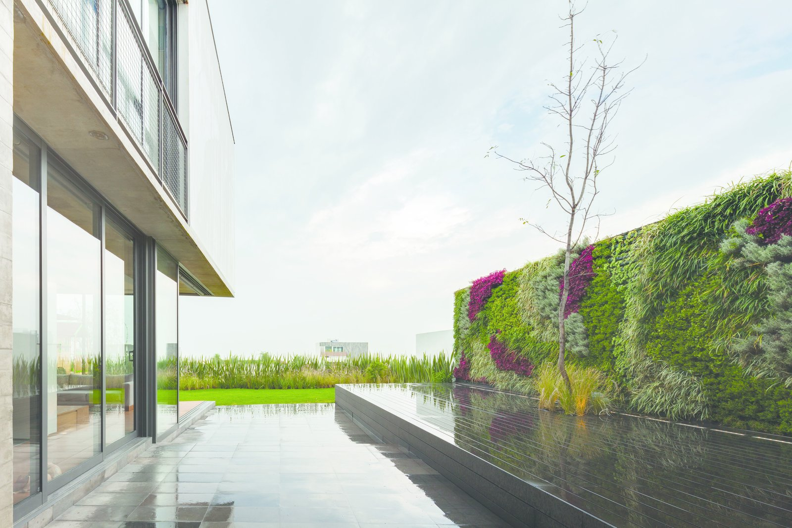 The rear patio features a living wall. Photo courtesy of JSa.  Photo 6 of 8 in An Open, Light-Filled House in Mexico City