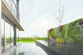 An Open, Light-Filled House in Mexico City - Photo 6 of 8 - The rear patio features a living wall. Photo courtesy of JSa.