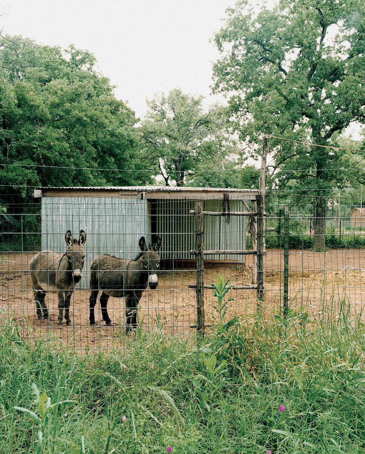 In a dense neighborhood, the glass facade might overexpose the Farleys to passersby, but out here, the only onlookers are coyotes—and the miniature donkeys who live next door.  Photo 7 of 13 in Lone Star