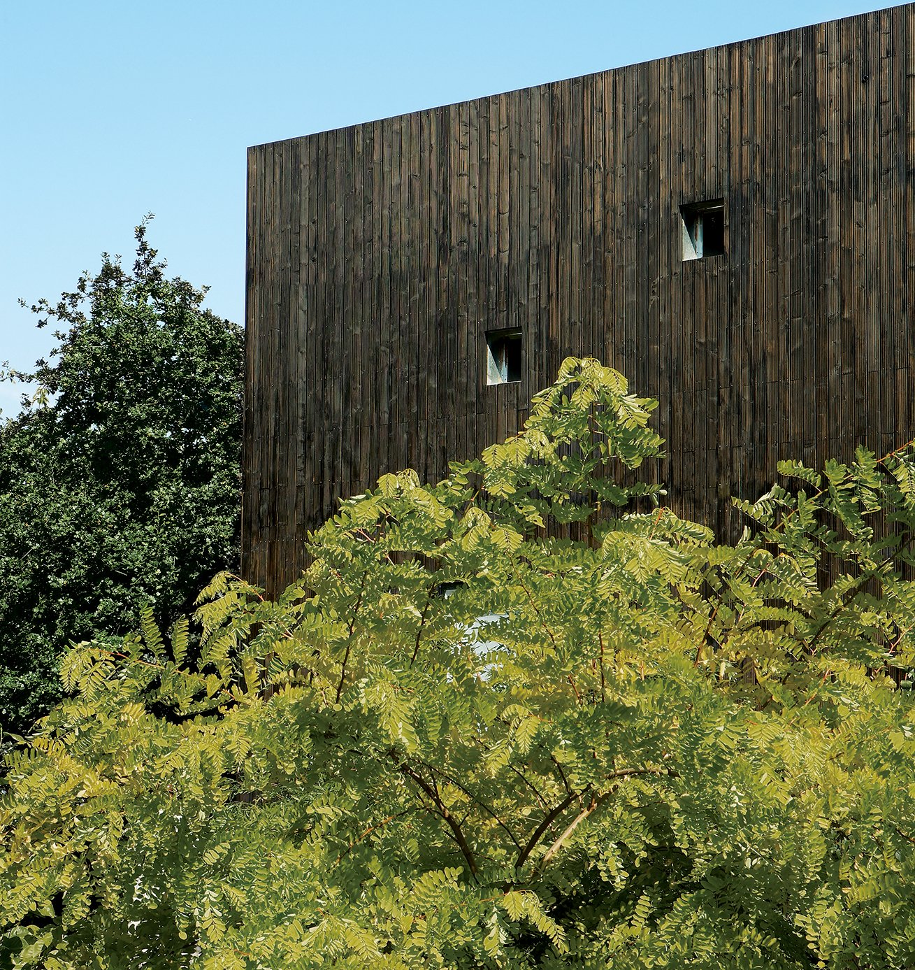 The house's stained-cedar cladding makes a stark but pleasing contrast to the natural foliage of the site.  Photo 2 of 13 in All Clad