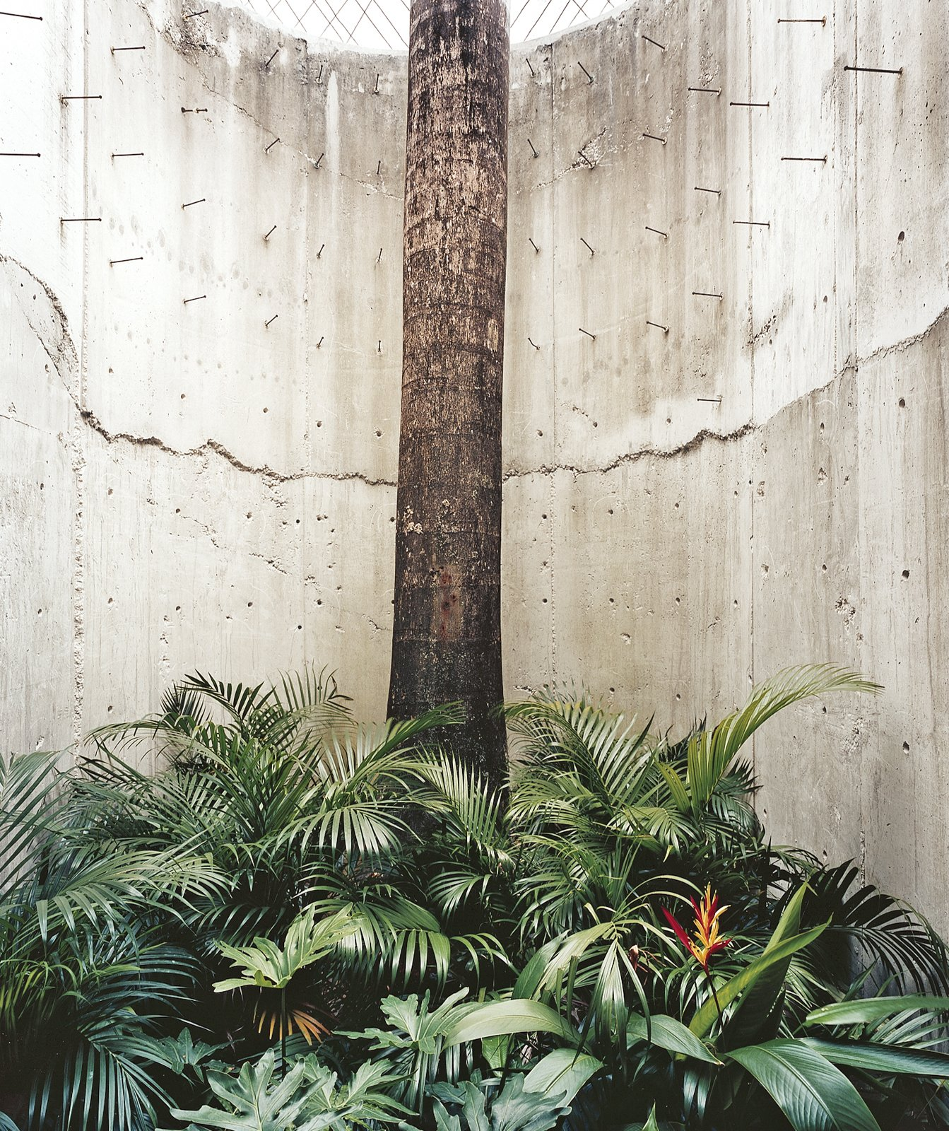 The house is largely enclosed for privacy, but hints of the outdoors, with its tropical light, are always close by. A royal palm enclosed in concrete suggests the contained foliage of courtyards found in older San Juan homes.  Photo 8 of 8 in San Juan, PR