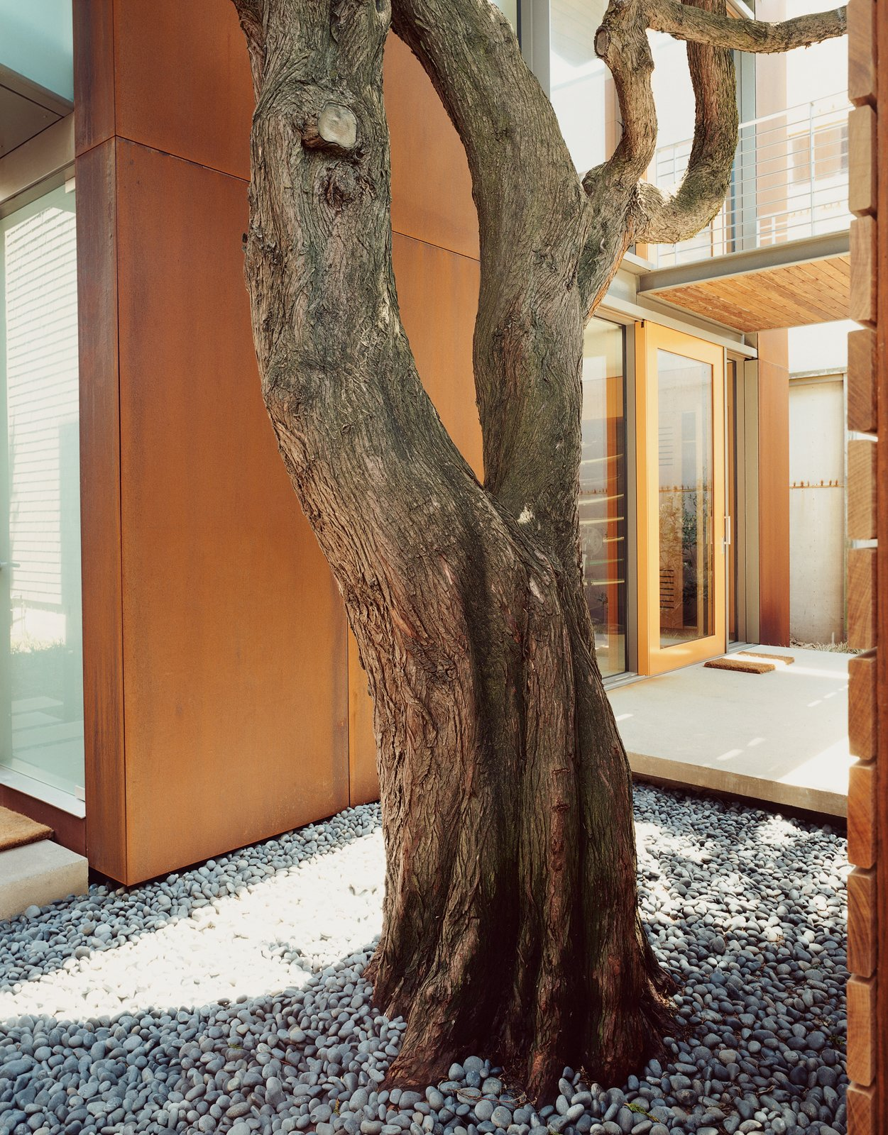 Aidlin Darling took pains during construction to preserve the cypress trees that give the Great Highway House so much of its charm. Tagged: Outdoor, Small Patio, Porch, Deck, and Concrete Patio, Porch, Deck.  Photo 6 of 16 in 15 Brilliant Designs That Work Around Nature from This Surfer's Beach House is More Than It Seems