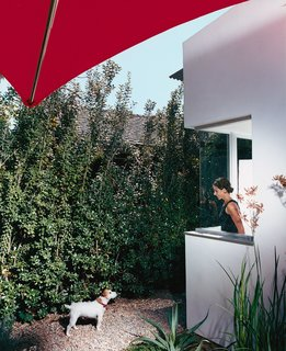 Dawn Farmer looks out from her office at Darby, one of the couple's two dogs, in the front yard. The house is clad in smooth stucco top-coated with white Venetian plaster, and has a perimeter wall made of Cor-Ten steel panels and stuccoed cinder blocks.