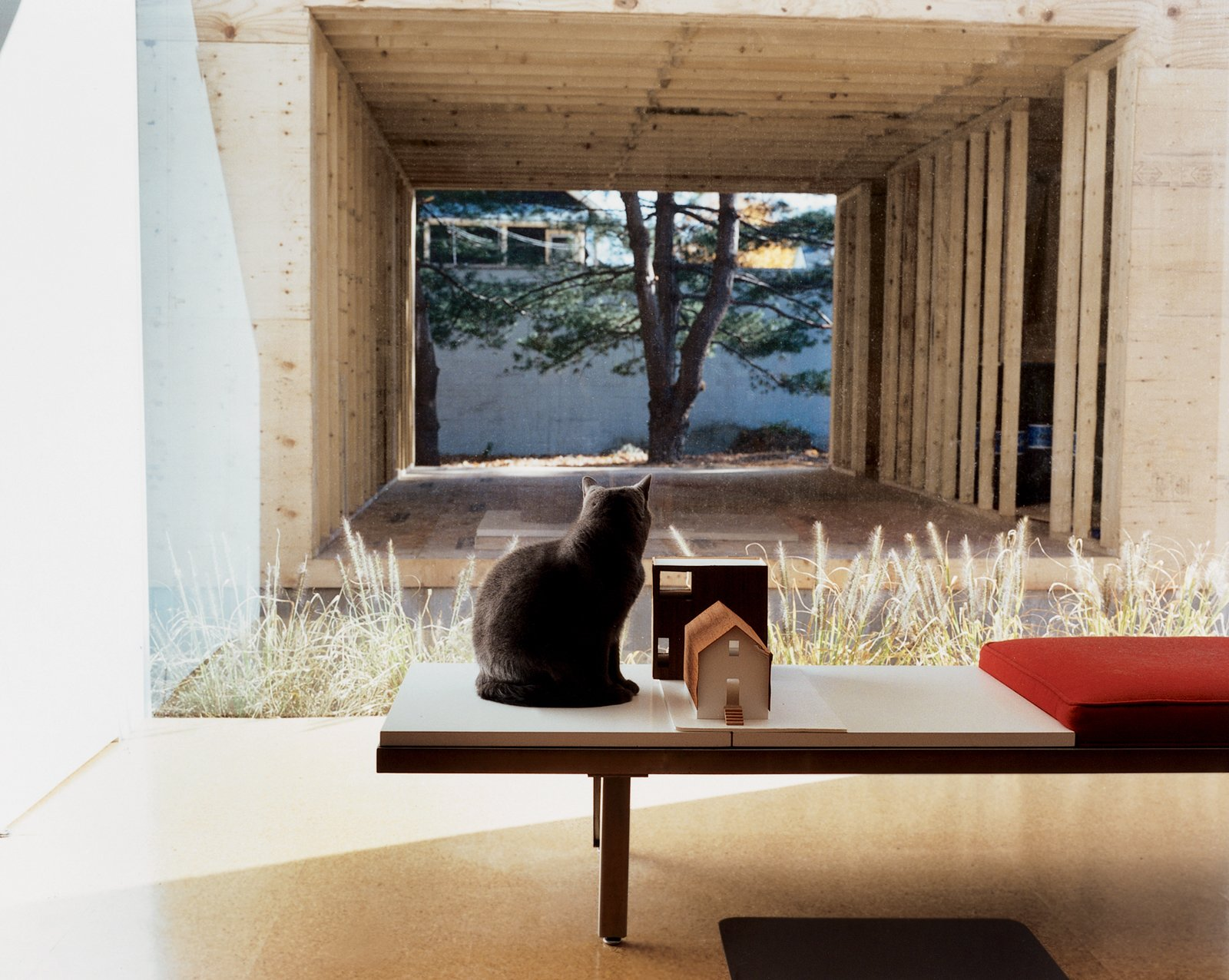 Seated on a George Nelson bench, feline resident Miu Miu gazes through the east picture window at the ongoing construction. Sharing the bench is a quarter-inch-to-one-inch-scale model of the house and addition. New Beginnings - Photo 1 of 11