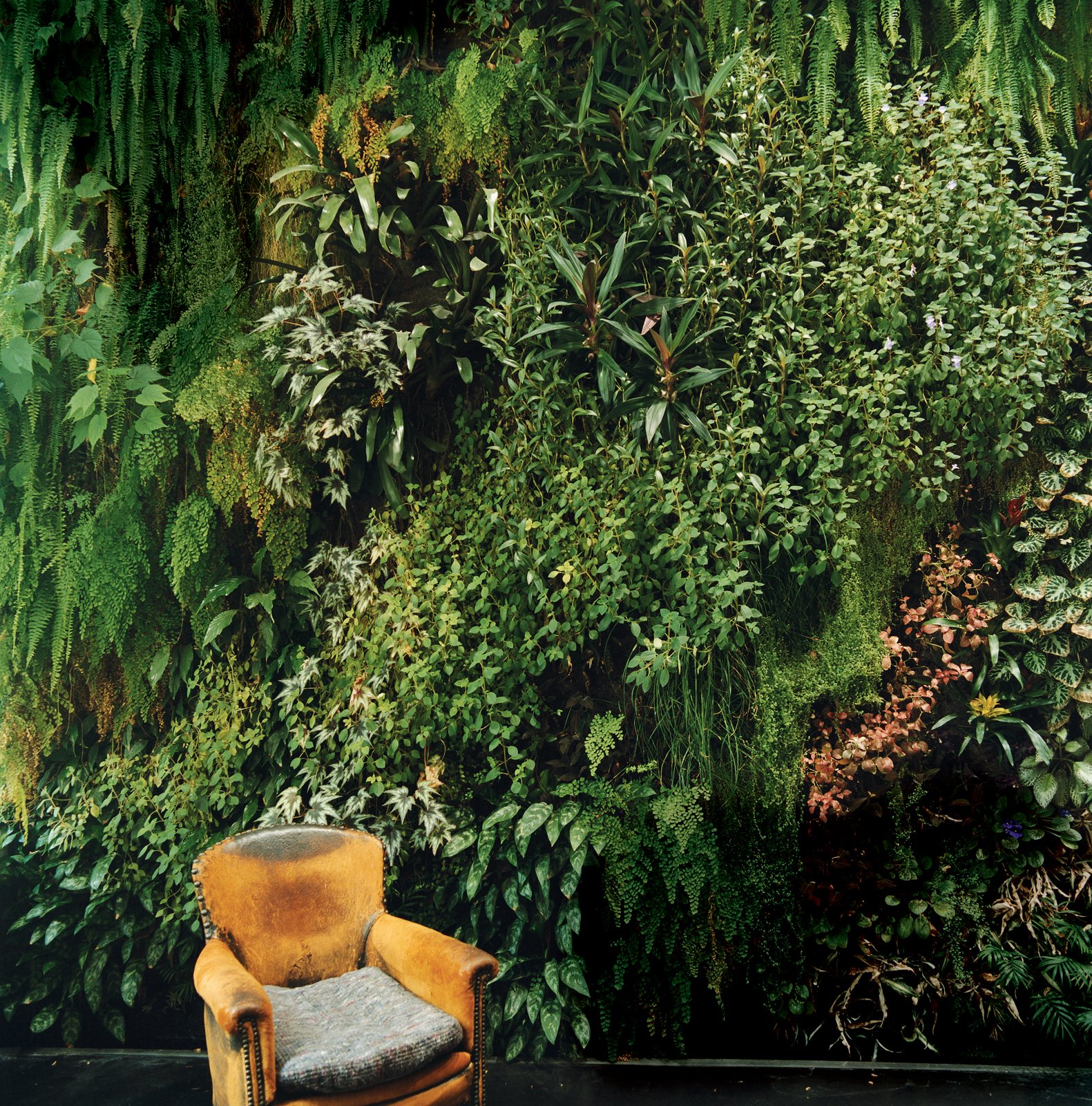 The indoor garden wall Patrick Blanc created for his friends the Dimanches is so lush, it's almost as if someone has plopped an easy chair down in the middle of a forest.  Lush Life by Heather Corcoran from Garden Apartment