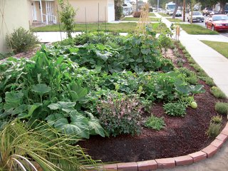 The Lawn Goodbye - Photo 2 of 5 - The Fotis made friends with neighbors by giving away some of the surplus the new garden produced. Lucky locals walked away with natural delicacies such as white beauty eggplants, Brandywine tomatoes, lemon cucumbers, kumquats, apricots, pears, purple sage, rosemary, and thyme.