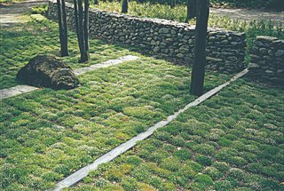 Supplant Your Lawn - Photo 2 of 2 - For H. Keith Wagner's Hilltop residence, moss is the green ground cover alternative to water-guzzling grass.