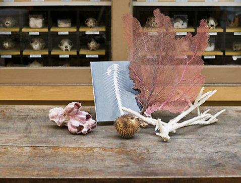 ID Visit's RISD's Natural Habitat