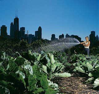 A City Farm worker sows the seeds of Ken Dunn's efforts. The proposed Mobile City Farmstead would allow the farms to adjust to their city's evolving economic and social landscapes with ease.