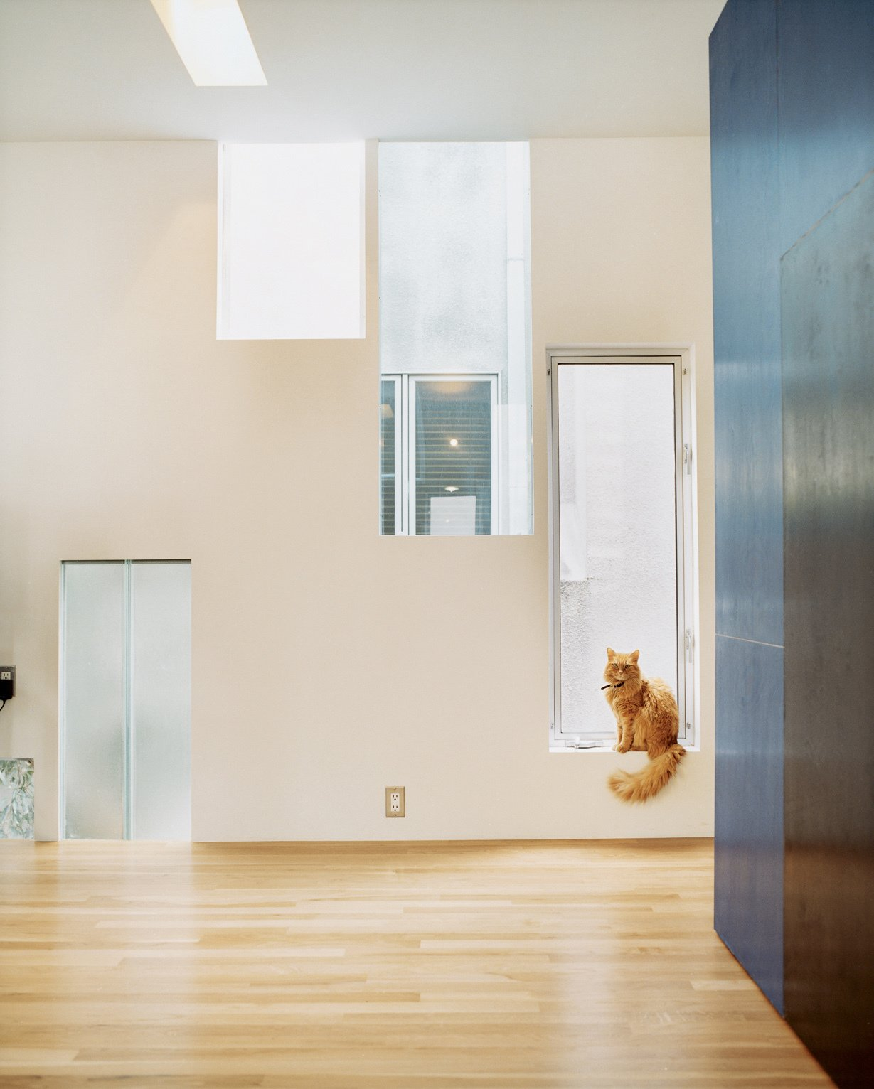 Windows transcend floor levels to discretely frame views of the surrounding neighborhood, offering slices of the vistas beyond. Tagged: Windows, Picture Window Type, and Metal.  Photo 14 of 21 in 21 Cats Living in the Modern World from Kaleidoscopic Cabinet