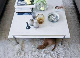25 Dogs Living in the Modern World - Photo 20 of 25 - The Skinny coffee table (perfect for unauthorized doggy dining) by Prospero Rasulo for Zanotta is also a display board for Jeanette's growing collection of Stig Lindberg and Bjorn Wiinblad ceramics.
