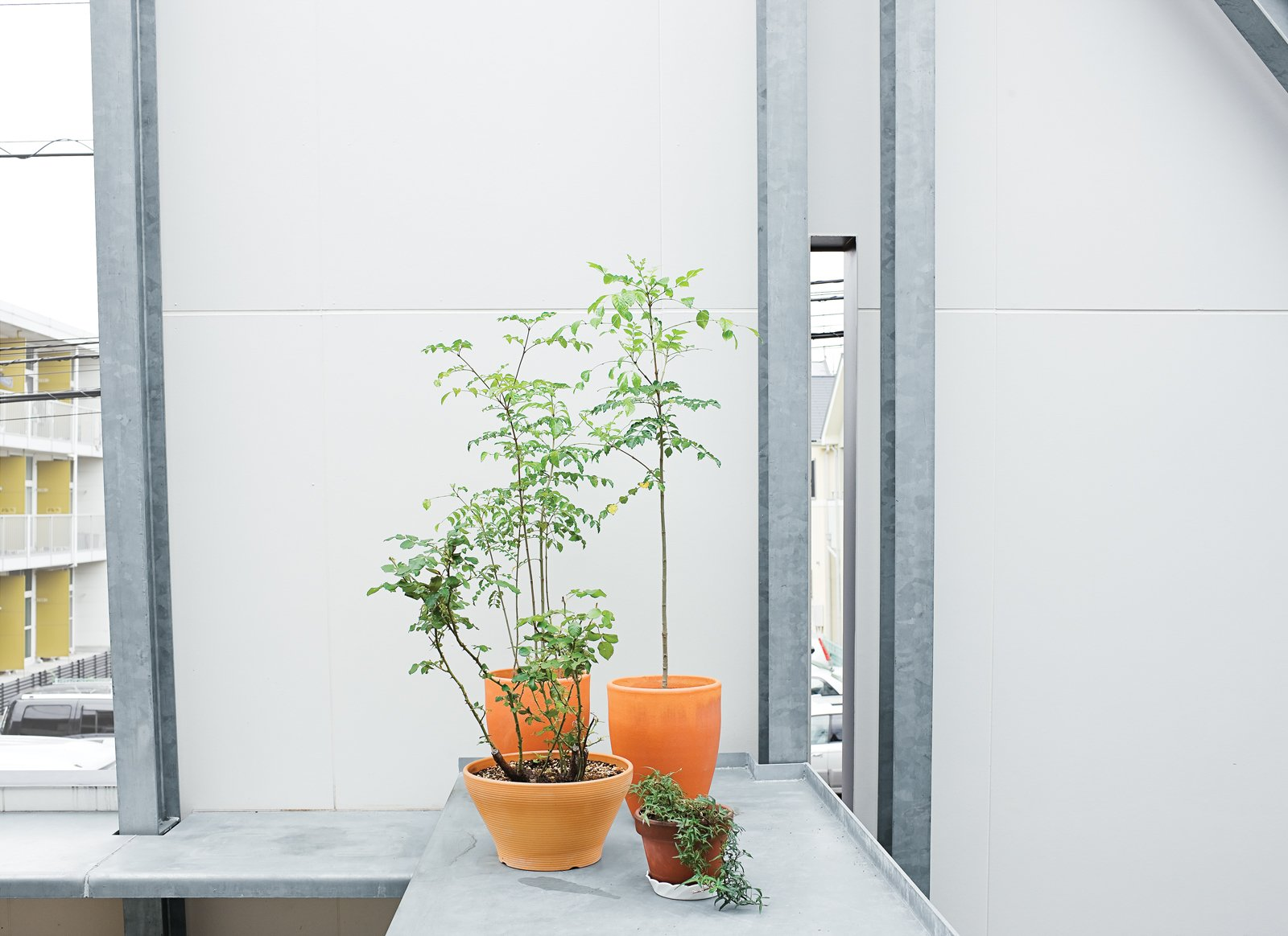 Plants thrive on the sheltered terrace.  Photo 3 of 14 in Small Box Home with Black Metal Facade in Japan