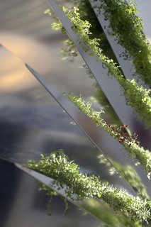 Grass Mirror - Photo 1 of 5 -