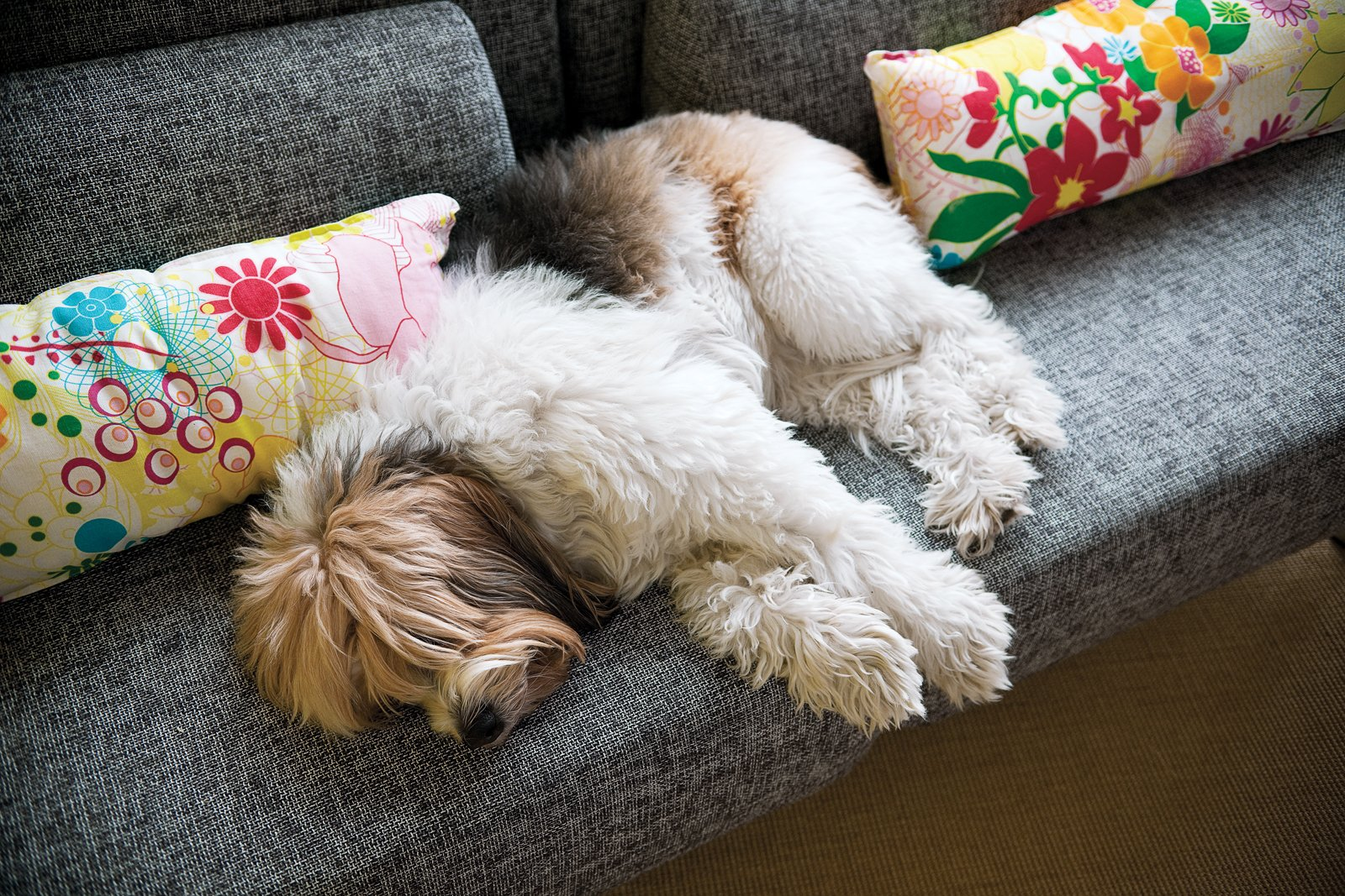 Pork Chop, the dog, has plenty of comfortable places to nap between meals.  Dogs Who Love Modern Design by Brian Karo from Chef's Table