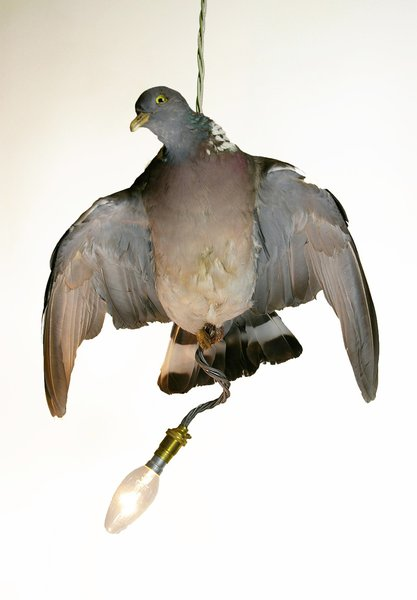 A single Pigeon Pendant.