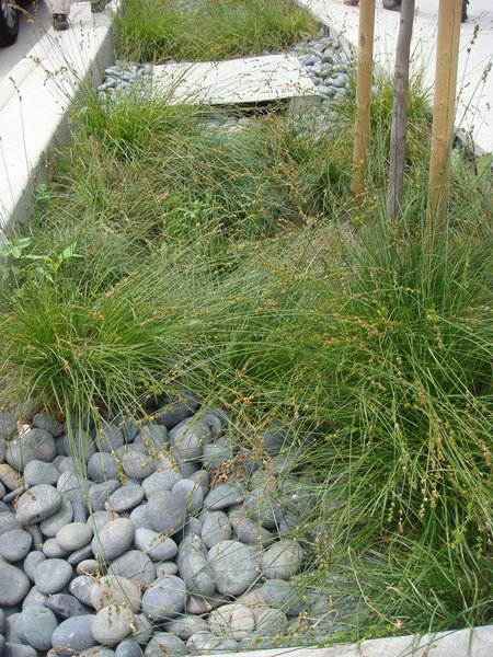 """Virtually all rainwater that falls on the site is treated in some capacity,"" says Project Architect Daniel Simons. The large site allowed Db+P to implement many sustainable landscaping features that aren't typically possible due to the space constraints found in most redevelopment projects. Instead of flowing directly into storm drains, water is channeled through swales and infiltration ditches, which helps reduce stormwater pollution."