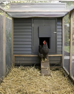 "Hens as clients, Snyder learned, are not too different from humans. ""They have the same considerations of comfort and protection from the elements,"" he says. Chicken-raising guides recommend that each bird be given two square feet in the coop and four square feet in the run. Snyder's design is a four-foot cube with a four-foot-by-15-foot run."
