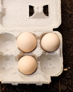 """Coop Dreams - Photo 9 of 9 - In the warm months, each of the couple's three hens lays an egg a day. """"It's a good thing we can only have a few chicken,"""" Snyder says. """"That'd be a lot of cholesterol to eat otherwise."""" Fortunately for Snyder and Martin, the hens' production slows to an egg per week in cool months (and some chickens stop laying eggs altogether in the winter). But even in the summer, the couple has plenty of friends happy to share a scramble."""