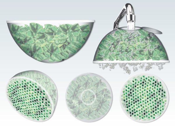Lettuce Container, created by Pratt Institute student Ali MacDonald for a Structural Packaging class.