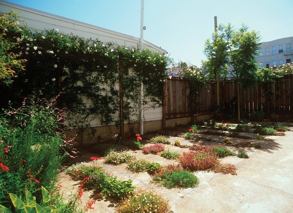 And here's the finished product. In 2009, the project garnered an Honor award from the ASLA in the Residential Design category. The 800-square foot garden cost just $500 to create.