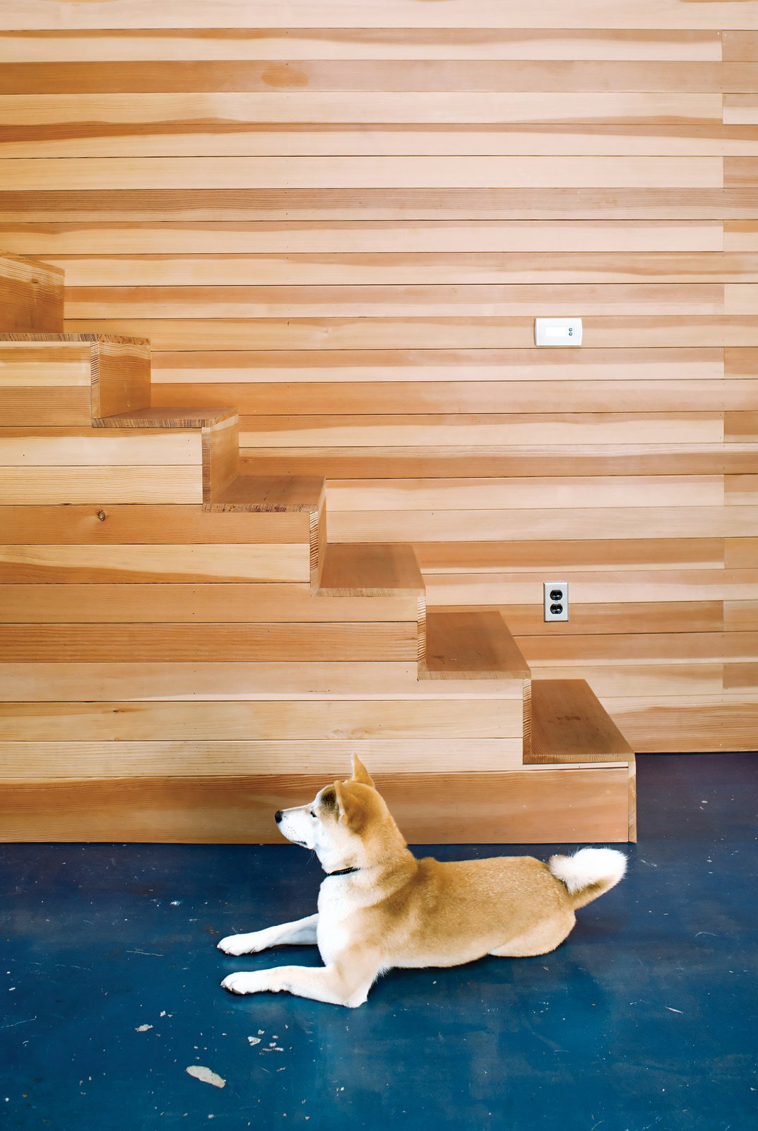 Ando, a Shiba Inu, was in the first Puppy Cam litter. Tagged: Staircase and Wood Tread.  Photo 6 of 19 in Storage Savvy Renovation in Emeryville