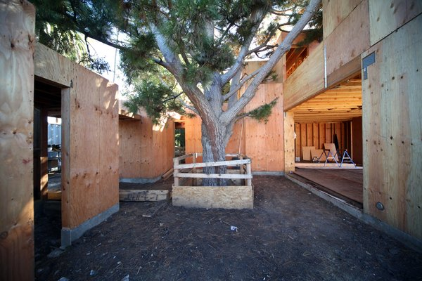 The Pine Needle Courtyard houses a mature Monterey pine tree. A carpet of needles was removed during grading but will return soon. The opening on the left is the entry vestibule and on the right is the living/dining/kitchen space.