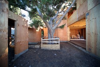 Dwell Home Venice: Part 12 - Photo 3 of 13 - The Pine Needle Courtyard houses a mature Monterey pine tree. A carpet of needles was removed during grading but will return soon. The opening on the left is the entry vestibule and on the right is the living/dining/kitchen space.