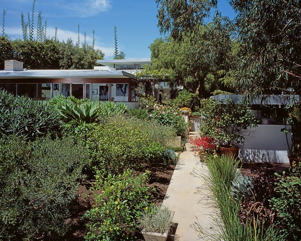 The house becomes part of Burton's landscape scheme.  Photo 2 of 6 in A Neutra Renovation in Los Angeles