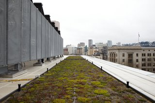 Commons' Grounds - Photo 6 of 9 - A living roof is among the project's many green features.