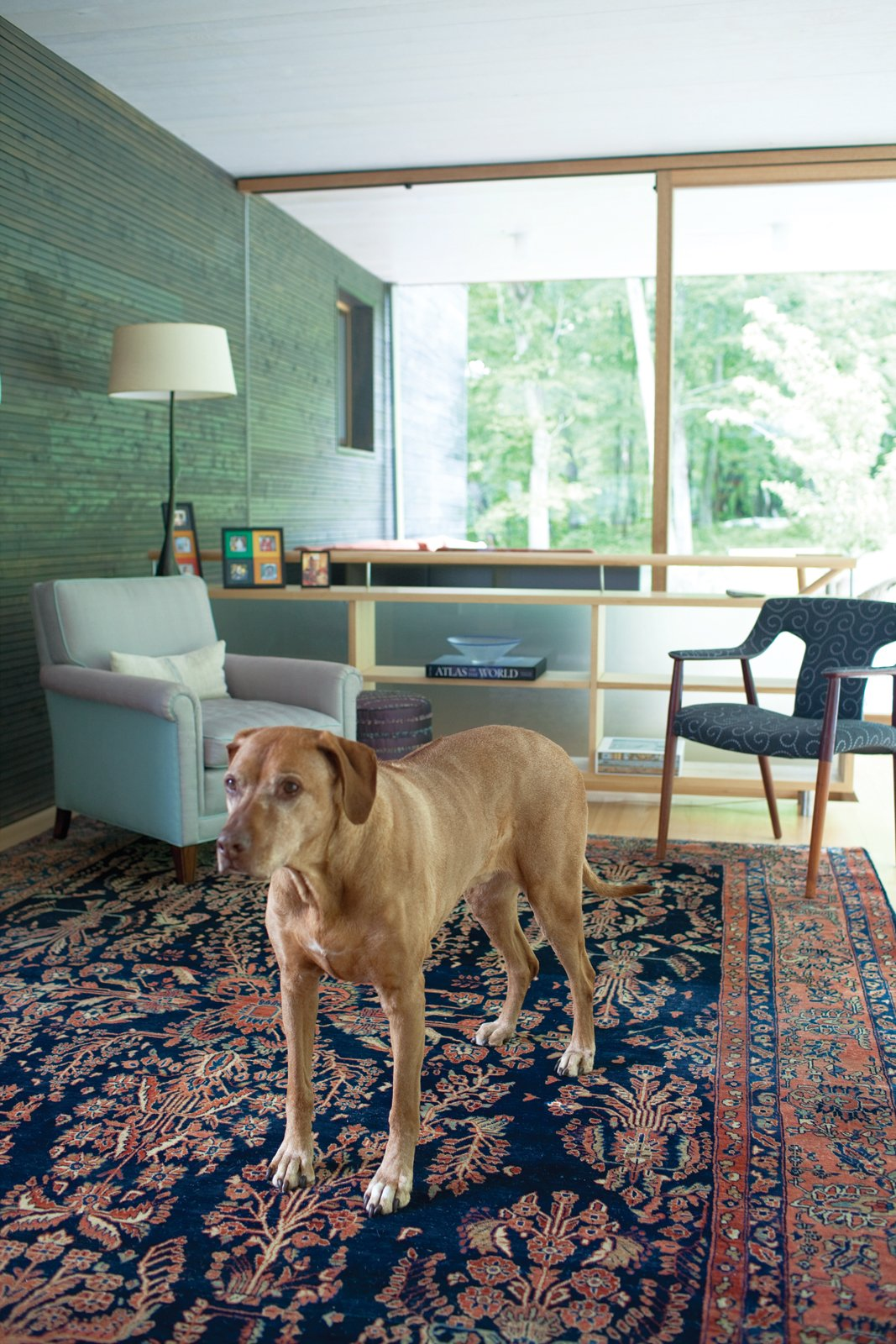 Otto is a handsome complement to the Persian Sarouk rug and Gray's sophisticated interior design work. Tagged: Living Room and Chair.  Photo 6 of 25 in 25 Dogs Living in the Modern World from Gable-Roofed Rural Weekend Home in Connecticut
