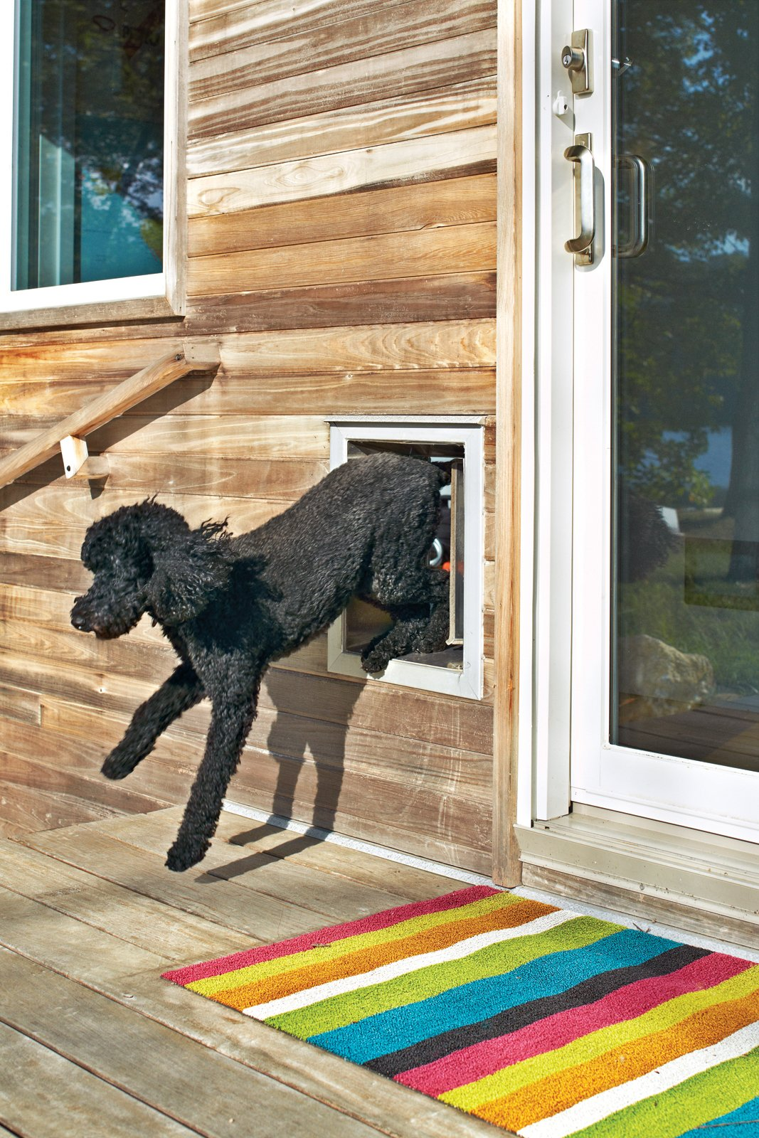 Emergency Exit: A poodle-size dog door is a must for Max, who, as his owner reports, loves the lake house. Blake has also been known to eschew the sliding glass doors in favor of the smaller exit point.  andersenwindows.com Tagged: Doors and Exterior. 25 Dogs Living in the Modern World - Photo 5 of 25